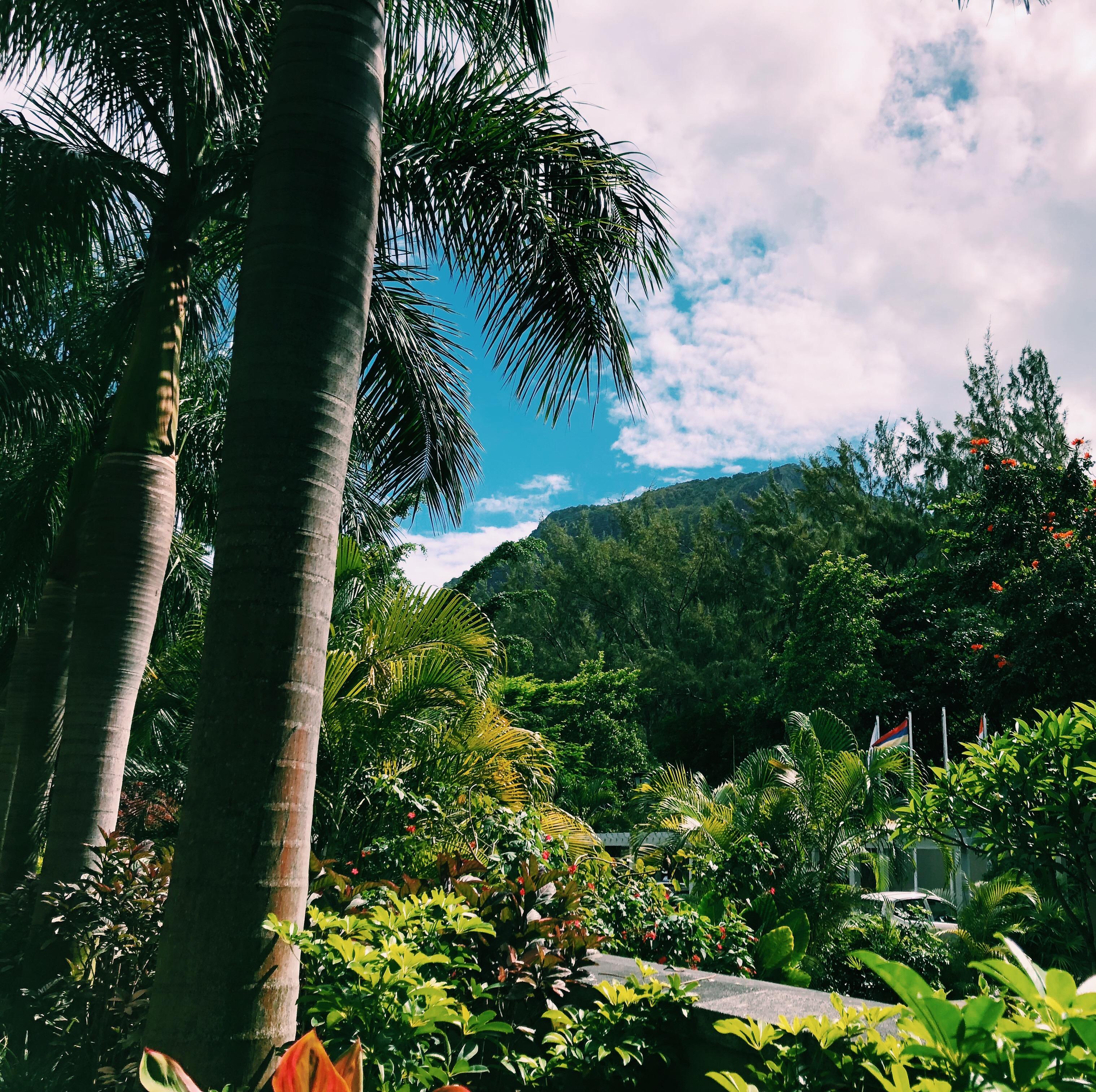 Dezember auf...Mauritius St. Regis