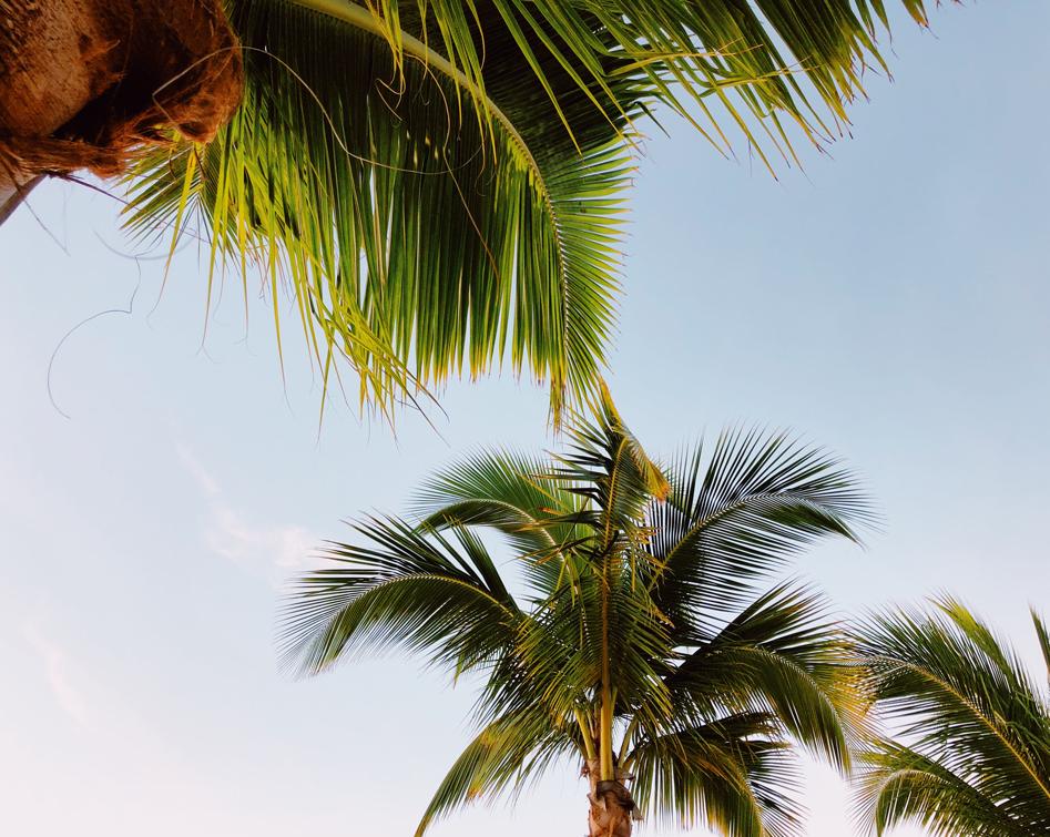 Dezember auf...Mauritius Strand mit Palmen